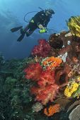 pic of raja  - The view of a scuba diver and a colorful reef scene Raja Ampat Indonesia - JPG