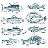 Sketch Fishes. Trout And Carp, Tuna And Herring, Flounder And Anchovy. Hand Drawn Commercial Fish Ve poster