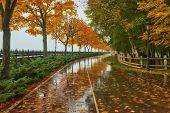 Autumn Park, Rainy Background, Autumn Landscape Background Rain Texture In An October Park, Walk In  poster