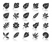 Leaf Silhouette Icons Set. Monochrome Sign Kit Of Season Foliage. Autumn Garden Pictogram Collection poster