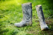 Wellington dirty boots on meadow grass