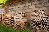 stock photo of game-cock  - Fighter cocks in cages ready for action - JPG
