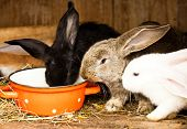 pic of excrement  - Three different rabbits closeup in hutch close up - JPG
