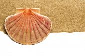 closeup of a scallop shell on the sand, on a white background with a blank space to write your text