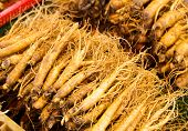 image of ginseng  - Ginseng root stick - JPG