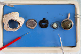 foto of eye-sockets  - Dissecting a sheep eye with the various tissues displayed on a tray including the eyeball lens and surrounding muscle from the eye socket - JPG