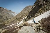 picture of dog-walker  - Two hikers and two dogs traversing the snow in the mountains of Restonica near Lac de Melo - JPG