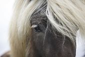 stock photo of iceland farm  - Icelandic horse eye and hair detail. Horizontal format