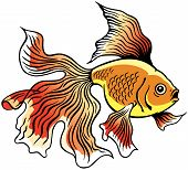 stock photo of goldfish  - goldfish or golden fish - JPG
