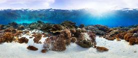 image of biodiversity  - Underwater panorama of the vivid coral reef in tropical sea - JPG