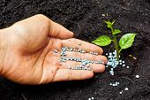 stock photo of fertilizer  - hand giving fertilizer to a young tree - JPG