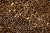 stock photo of humus  - Ground surface - JPG