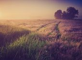 image of sunrise  - Beautiful photo of rural foggy meadow landscape photographed at sunrise. Landscape with vintage mood usefull as background.