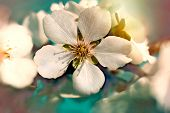 picture of stamen  - Beautiful spring beauty - JPG