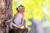 image of crab  - Little Monkey  - JPG