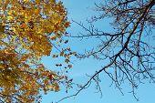 foto of opposites  - Two opposite trees - JPG