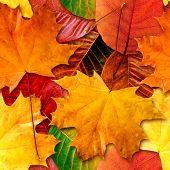 image of fall leaves  - Fall leafs seamless background  - JPG