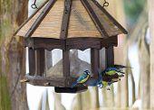 Bird Great Tit In Bird House, Bird Feeder poster
