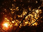 stock photo of goodnight  - A setting sun says goodnight as it hides behind the trees - JPG