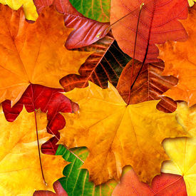 picture of fall leaves  - Fall leafs seamless background  - JPG