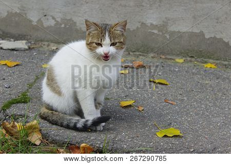 poster of Stray Animals, Pets, Animals Concept.  Cute Tabby Cat On The Street. Sad Stray Cat. Cute Cat On The