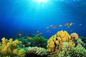 image of biodiversity  - Tropical Fish and Coral Reef in Sunlight - JPG