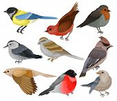 Set Of Winter Birds. Wildlife And Fauna Theme. Wild Feathered Animal. Flat Vector Elements For Ornit poster