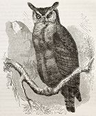 Great Horned-owl old illustration (Bubo virginianus), also known as Tiger Owl. Created by Kretschmer