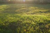Green Grass In A Clearing. The Evening Sun Illuminates The Meadow Or Meadow. poster
