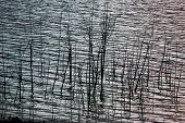 Rest On The Shore Of The Reservoir. Beautiful Water Landscape In Nature In The Forest. Calm Lake On  poster