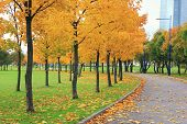 Autumn Park Alley And Colorful Orange Trees On Fall Season Day With No People. Cozy Park Road And Wa poster