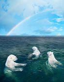 stock photo of polar bears  - Three polar bears in the dark cold water rainbow is on the background - JPG