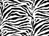 foto of camoflage  - Zebra skin vector - JPG