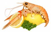 stock photo of norway lobster  - A single langoustine shellfish with lemon and parsley garnish - JPG