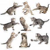 stock photo of lovable  - tabby kittens isolated collection - JPG