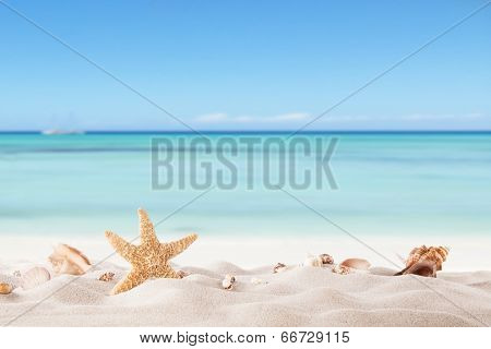Summer concept with sandy beach, shells and starfish. poster