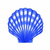 picture of scallop-shell  - Watercolor illustration of Scallop shell on white background - JPG