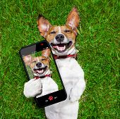 stock photo of shot glasses  - super funny face dog lying on back on green grass and laughing out loud taking a selfie - JPG