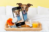 picture of continental food  - dog taking a selfie in bed in the morning - JPG