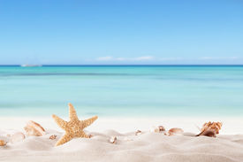 stock photo of starfish  - Summer concept with sandy beach - JPG