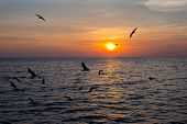 Постер, плакат: Tranquil Scene With Seagulls Flying At Sunset