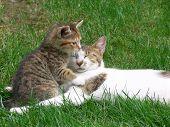 Постер, плакат: мать кошка и котенок