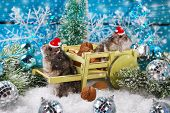 image of hamster  - two little hamsters in santa hats waiting for christmas in winter scenery - JPG