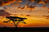 pic of nationalism  - African sunset in the savannah of the Serengeti National Park - JPG