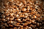 pic of coffee crop  - coffee beans background - JPG