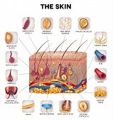 picture of pigment  - Skin anatomy detailed illustration - JPG