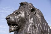 picture of lions-head  - London 21 Aug 2013  - JPG