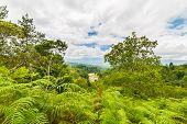 stock photo of rainforest  - Dense rainforest and stunning landscape in Toraja Area South Sulawesi Indonesia - JPG