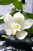 picture of white flower  - Wet stones and white flower with green leaf - JPG