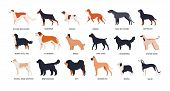 Bundle Of Funny Cute Dogs Of Different Breeds Isolated On White Background. Set Of Purebred Pets Or  poster